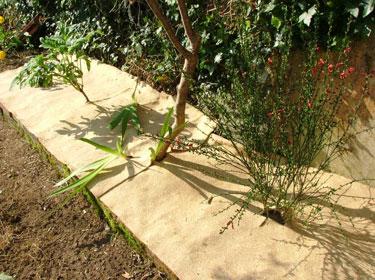 Paillage écologique pour jardins